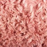 Texture de laine Photo libre de droits