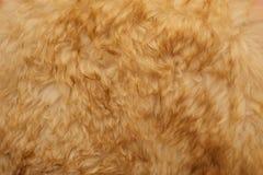 Texture de laine Image stock