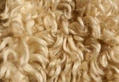 Texture de laine de moutons Photos stock