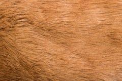 Texture de laine lisse brune image libre de droits