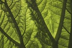 Texture de lame Photographie stock libre de droits