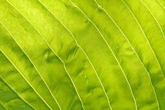Texture de lame Photo libre de droits