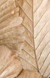 Texture de lame de Brown Photo libre de droits
