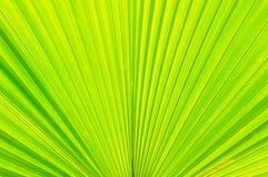 Texture de lame de Plam Images libres de droits