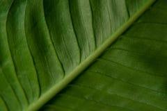 Texture de lame verte Photographie stock libre de droits