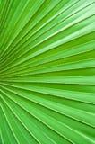 Texture de lame verte image stock