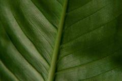 Texture de lame verte Macro Ba en gros plan artistique de texture de nature Photo libre de droits