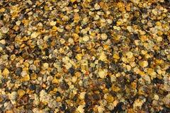 Texture de lames d'automne Photos libres de droits