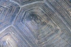 Texture de Live Tortoise Shell photo libre de droits