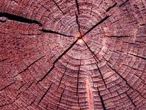 Texture de logarithme naturel Image stock