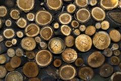 Texture de logarithme naturel de tronçon Photographie stock libre de droits