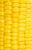 Texture de maïs Photographie stock
