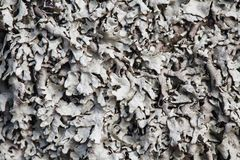Texture de mousse Photos stock