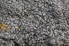 Texture de mousse Image libre de droits