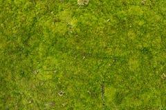 Texture de mousse images libres de droits