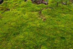 Texture de mousse photo stock