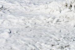 Texture de mousse de mer Photographie stock
