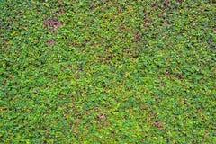 Texture de mousse, fond Images stock
