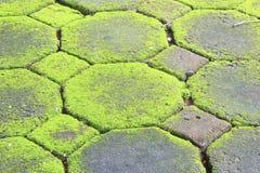 Texture de mousse, fond Image libre de droits