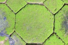 Texture de mousse, fond Photographie stock
