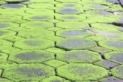 Texture de mousse, fond Photo libre de droits