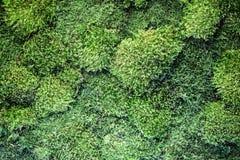 Texture de mousse vivante décorative sur le mur, décor écologique photos stock