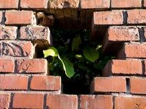 Texture de mur de briques de la vieille maison Images libres de droits