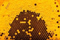 Texture de nid d'abeilles Photo libre de droits