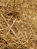 Texture de paille Images stock