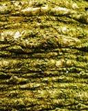 Texture de paume Photo stock