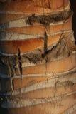 Texture de paumes de tige de tranche Photo stock