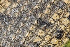 Texture de peau de crocodile Photographie stock libre de droits