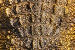 Texture de peau de crocodile Images stock