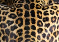 Texture de peau de léopard Image libre de droits