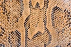 Texture de peau de python Photographie stock libre de droits