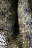 Texture de peau de serpent Photo libre de droits