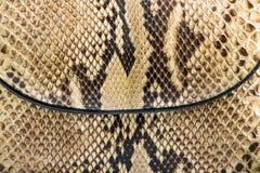 Texture de peau de serpent véritable Images stock