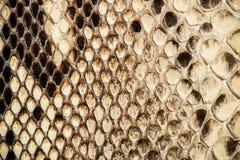 Texture de peau de serpent véritable Photo libre de droits