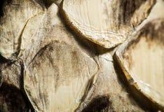 Texture de peau de serpent véritable Photographie stock