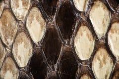 Texture de peau de serpent véritable Photographie stock libre de droits