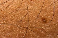 Texture de peau et de cheveux de corps Image libre de droits