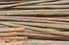 Texture de peau de Shell de tas de tronc d'eucalyptus photo stock