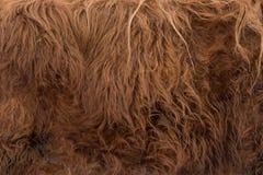 Texture de peaux d'animal de vache brune photos libres de droits