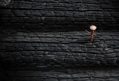 Texture de plan rapproché de bois brûlé avec un clou rouillé Images stock