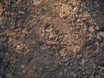 Texture de plan rapproché sec d'humus Sol cultivé, au sol de saleté, fond brun de terre Agriculture biologique, faisant du jardin image libre de droits