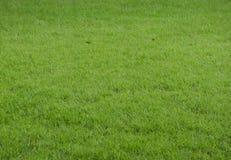 Texture de plancher de gazon d'herbe verte Images libres de droits