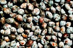 Texture de prunes Image stock