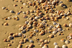Texture de rivage de mer Image libre de droits