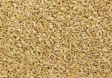 Texture de riz brun photos libres de droits