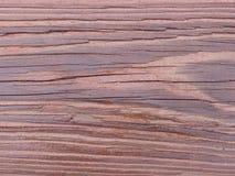 Texture de séquoia Images stock